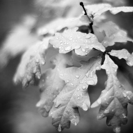 Regentag im Eichenwald
