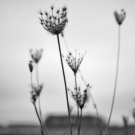 Filigrane Blütenstände