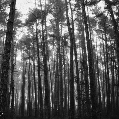 Novembernebel im Wald
