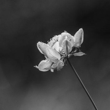 Blume im Wald