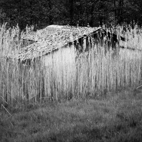 Die Hütte im Schilf