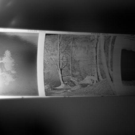 Kodak Tri-X mit Rodinal 1:50 entwickelt (im Wald am Hechtsee)