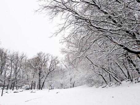 Weg bedeckt mit Schnee