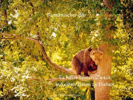 Ich möchte eine Person erleben, die ca. 2-5 km mitten im Wald des Weges spazieren geht und ein hungriger Bär hat die Witterung aufgenommen und die Person anschließend verfolgt