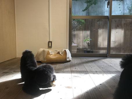 DOGSALONSEALY ドッグサロンシーリー トリミングサロン 表参道 外苑前 南青山 トイプードル ドッグサロン