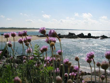 Le littoral finistérien, un bel endroit pour s' inspirer et créer les bijoux Aux Dames de Jadis
