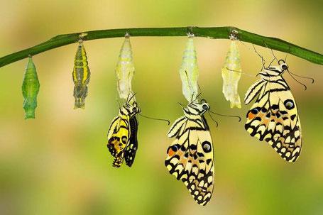 mision de vida sanacion proceso transformacion mariposa mujerconsciente.org