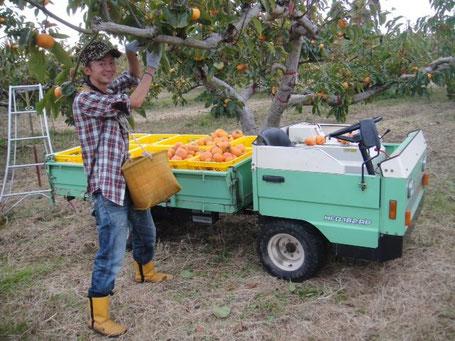 本巣市在住の柿農家