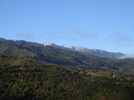 Nieve en la cumbre, febr. 2009