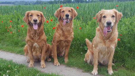 v.l.n.r. Maven, Enya und Ginger