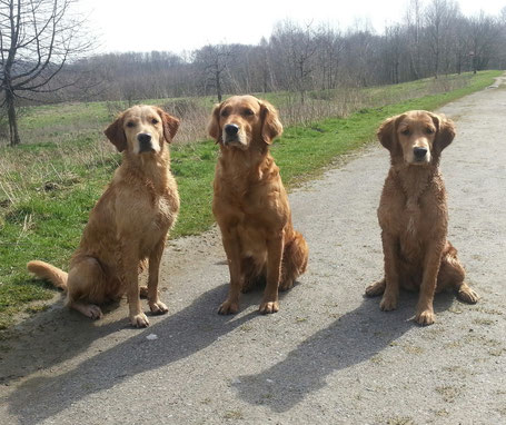 v.l.n.r. Cool marker´s Ginger, Golden Worker Discovery Enya, Fast and Friendly Action Maven