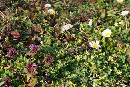... die ersten Frühlingsblumen und Kräuter sind schon da ... Winterblues ade!