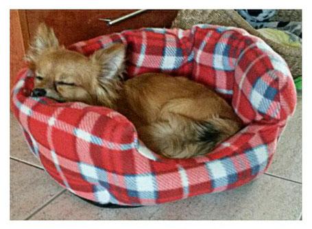 Bobby von Kühnen Mutes beim Mittagsschlaf