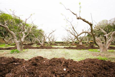 有機茶 有機栽培 畑 宝箱