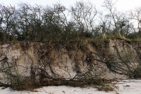 Küstenschutzdüne im Bereich des Hütelmoores mit Sanddornvegetation