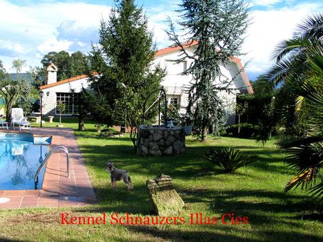 Criadero de Schnauzer Miniatura Illas Cies en Vigo  (Galicia)