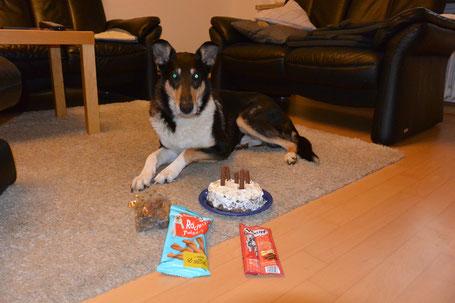 Blade liegt auf dem Teppich und schaut in die Kamera. Vor ihm ein Kuchen mit fünf Leckerlistangen als Kerzen.