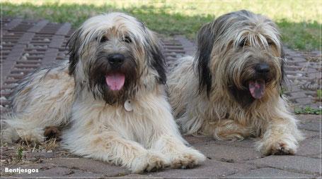 Bentjesgos Benito und Aila