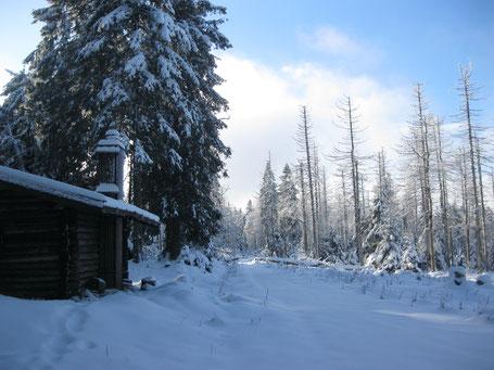 verschneiter Harzwald