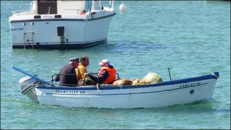 """Porspaul. Juillet 2008, François Jourden rentre d'une marée de petit goémon à Litiri. Il est accompagné de son fils et de son épouse. Il est l'éponyme de """"Sklosenn Feñch al Lannig""""."""