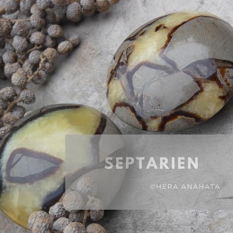 Sepatrien of septaria is ontstaan vanuit klei en modder ballen. Door de wisselende zeespiegel en de scheuren die hierdoor in de klei ontstonden.