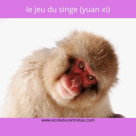 Qigong des cinq animaux: le singe qui nous regarde tendrement.