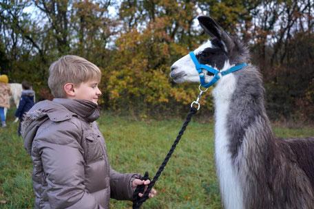 Tiergestützter sozialer Kompetenzkurs, Zeit mit Lamas, Selbstbewußtsein Kinder, Selbstvertrauen stärken Kinder, Kind mit Lama, Lama Mama, Sommerein, Niederösterreich