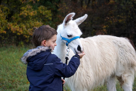 Kindergeburtstag mit Lamas, Kindergeburtstag, Lama mit Kind, LAMA MAMA, Sommerein, Niederösterreich