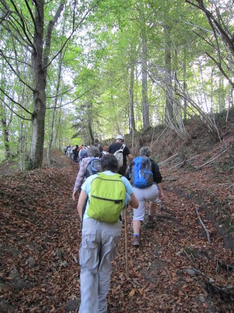 Photo 2016 balade forêt du Bager d'Oloron - La Grande Boucle