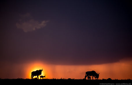 Fotograf Friedrichsdorf - Masai Mara