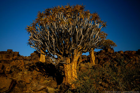 Fotograf Friedrichsdorf - Namibia
