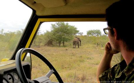 Wildlife vanuit de auto