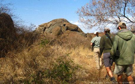 Wandeling tussen het wild in Zuid-Afrika
