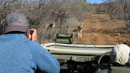 Leeuwen fotograferen vanuit jeep in Zuid-Afrika
