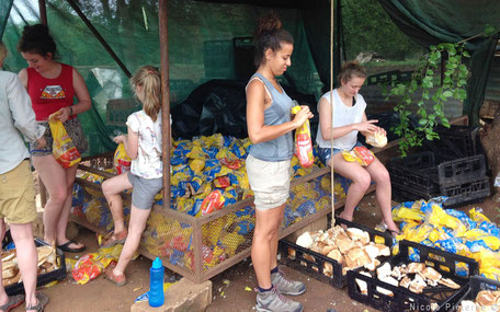 Vrijwilligers maken eten voor apen