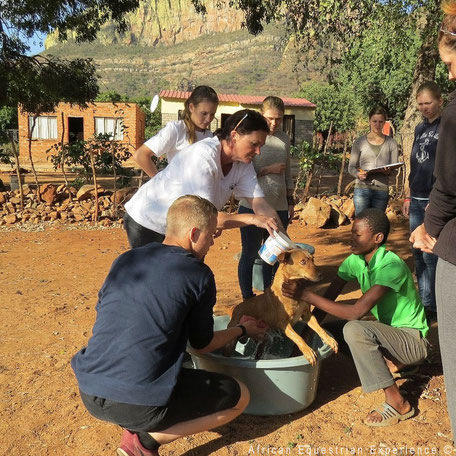 Vrijwilligerswerk met dieren in Zuid-Afrika