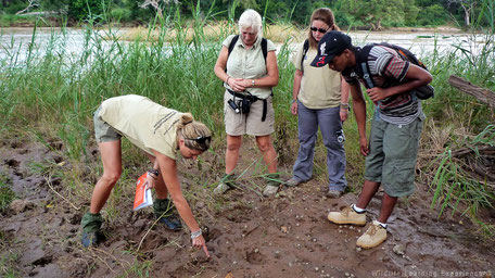 Spoorzoeken in de wildernis in Zuid-Afrika