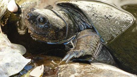 Allerlei soorten schildpadden
