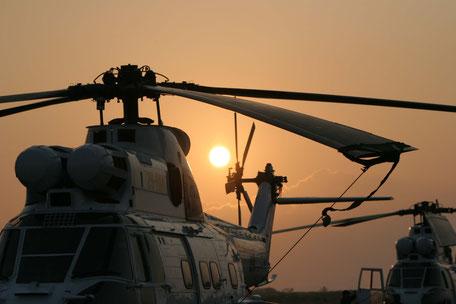 Puma mit Sonnenuntergang im Hintergrund