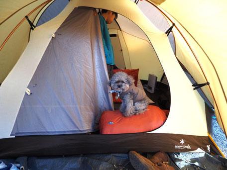ペットキャンプ