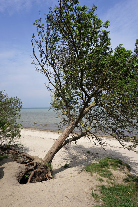 Wismar & Insel Poel, Auszeit für Großstädter, Teil II Insel Poel