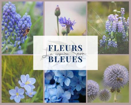 Visuel de fleurs bleues : hortensia, chardon, muscari, crocus, echinops par La cinquieme saison.