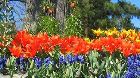 zum Garten-Blog von Lust-Blechwaren mit spannenden Beiträgen rund ums Thema Garten