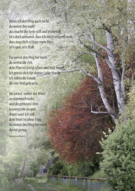 Bäume am Weg, Kinder Portrait, Christliche Spruchkarten, Hedwig von Redern