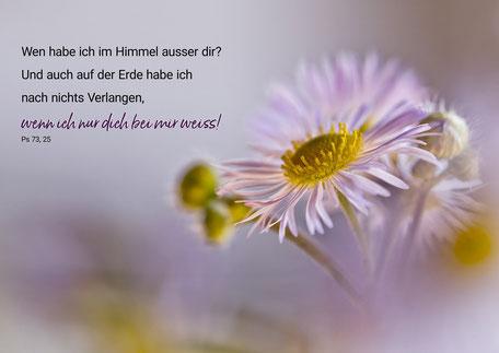 Feinstrahl, Blume