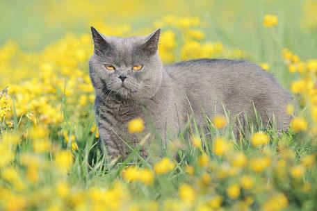 Haustierfotografie / Pet photography