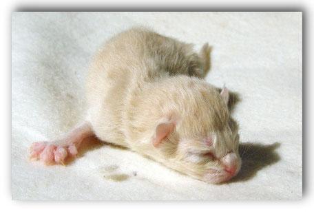 Unser Schatz Caboose verunglückte im Alter von 3 Wochen.