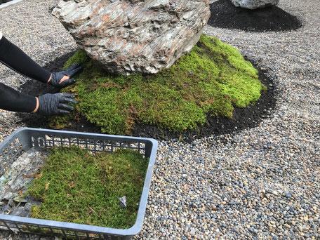 栃木県のバルコニー菜園のある家の家づくりの様子/苔の植え付け