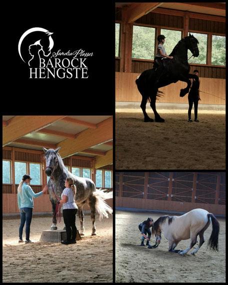Pferdetraining Zirzensik Barockhengste Sandra Plasser