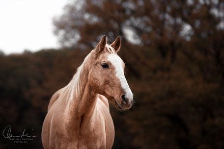 Tiergesundheit bei Pferden